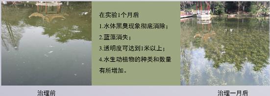 合肥稻香楼宾馆水体治理工程