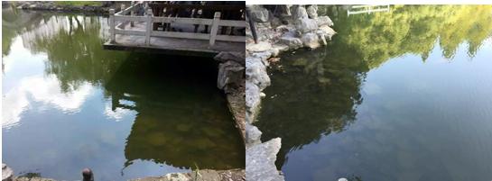 上海杨浦区长海新村西湖园水体治理工程